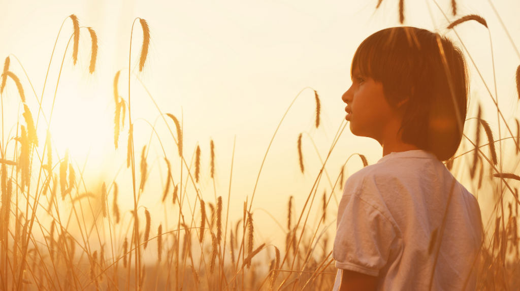 A young boy in a field of wheat at sunset is gazing into the distance.