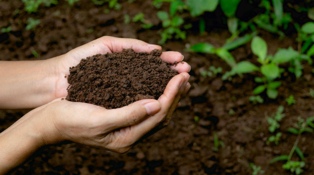 A person's hands holding soil.